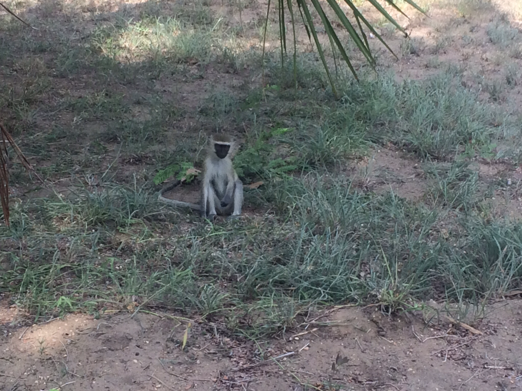 We have a very shy family of Monkeys living just behind our Private dorms.