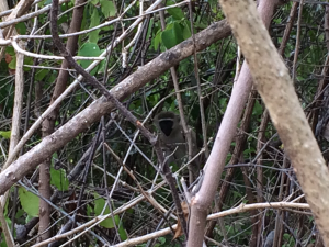 Hiding Monkeys